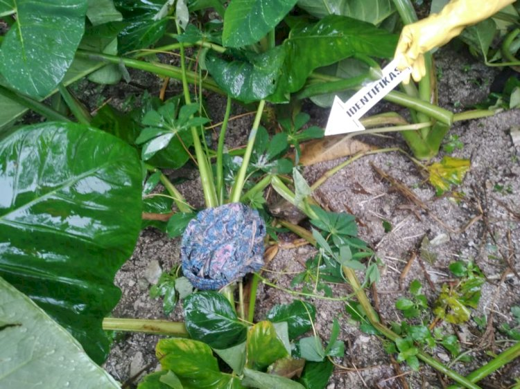 Olah TKP Penemuan Mayat Oleh Unit Identifikasi Polres  TTS